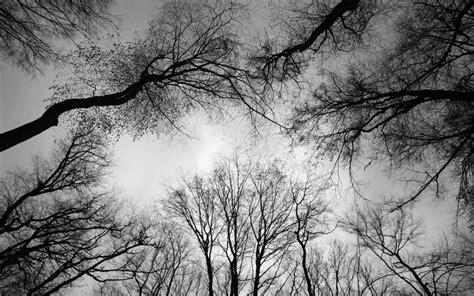 wallpaper dark tree oak tree wallpaper dark hd desktop wallpapers 4k hd