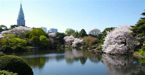 nel giardino dei ciliegi tokyo una boccata d fresca nel giardino shinjuku gyoen