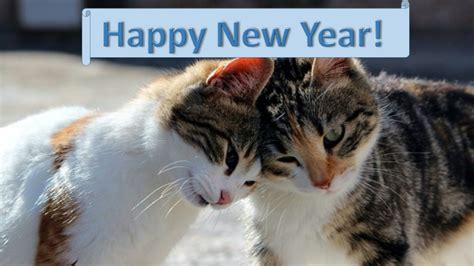 new year cat images new years resolutions for cats cats chaos and confusion