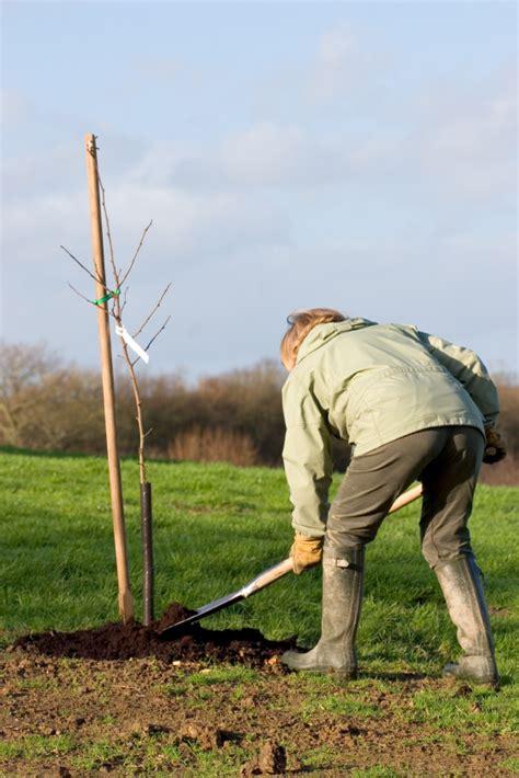 wann apfelbaum pflanzen pflanzzeit f 252 r den apfelbaum 187 wann ist der beste moment