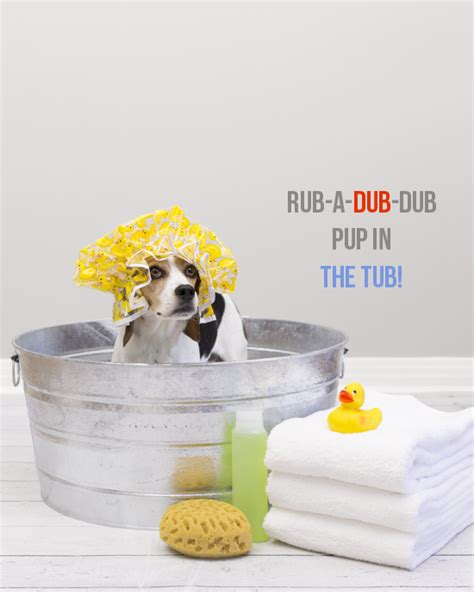 dogs and bathtubs bath funny dog quotes quotesgram