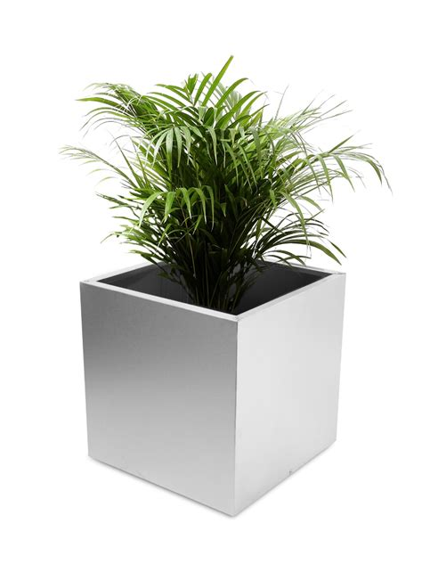 Metal Planters by Cube Brushed Stainless Steel Planter 50cm 163 149 99