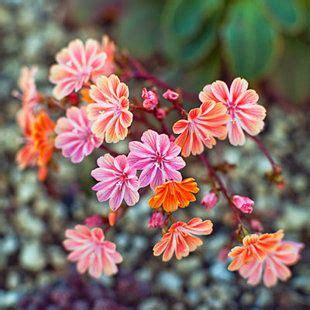plants that don t need a lot of sun pin by danielle graeff on for my garden pinterest