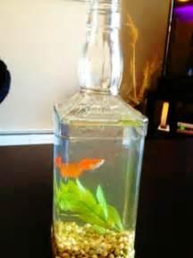 Liquor bottle fish tank