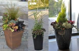 Winter Patio Plants Making Winter Gardens Brighter