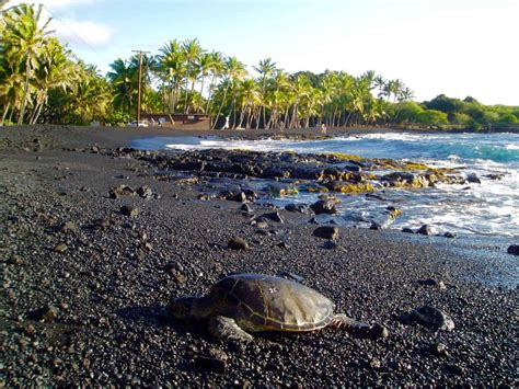 black sand beaches hawaii punalu u black sand beach big island hawaii
