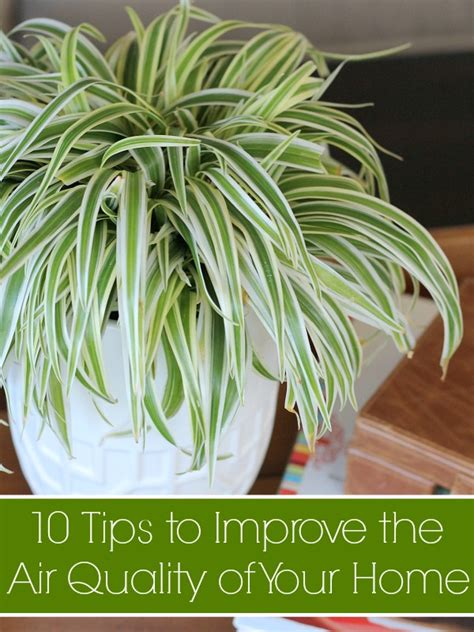 10 tips to improve the air quality of your home all
