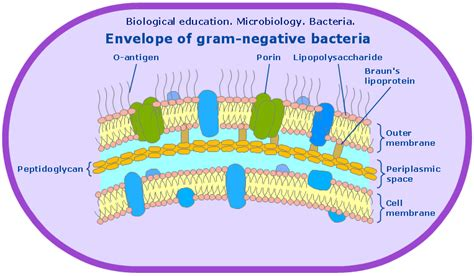 gram diagram conceptdraw sles science and education biology