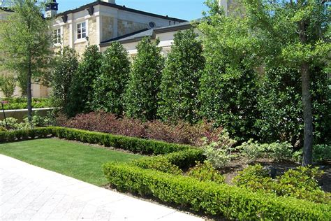 backyard shrubs privacy planting a privacy screen landscaping network