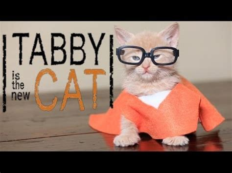 Orange Dog Meme - orange is the new black cute kitten parody youtube