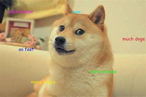 reddit succeeds  bringing doge  nascar sbnationcom