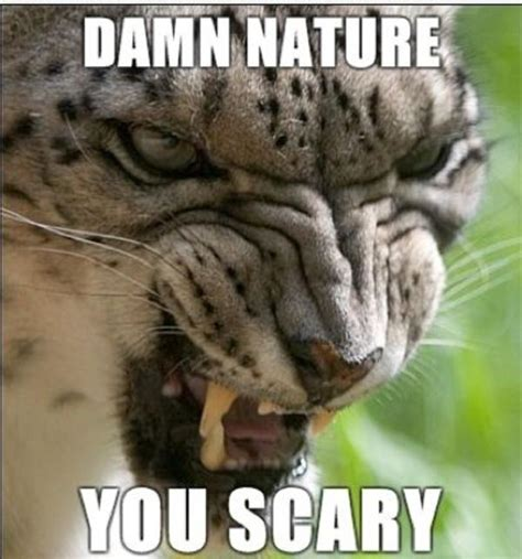 Damn Nature You Scary Meme - why scary are for you 100 images center why are you