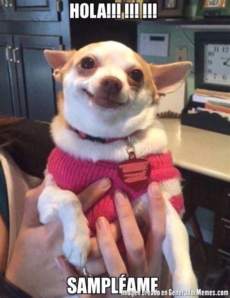 Memes De Chihuahua - hola sl 233 ame meme de chihuahua feliz