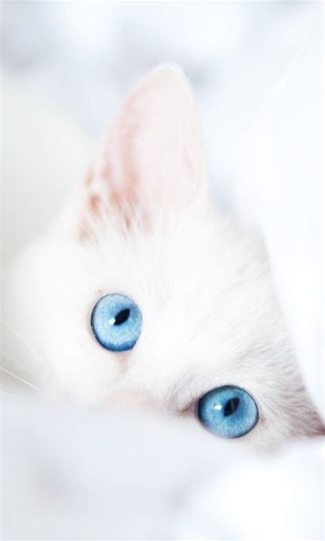 imagenes para fondo de pantalla gatos im 225 genes de gatitos animados de amor para el m 243 vil