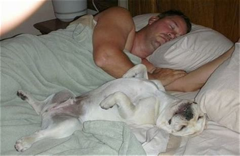 french men in bed french bulldog dog breed pictures 6