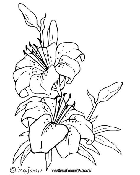 tiger lily coloring page scenic coloring pages shakespeare a midsummer
