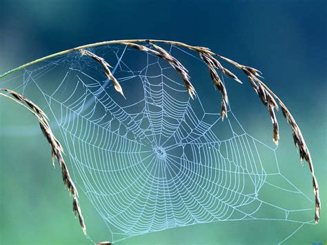 web on spider web wallpaper 1024x768 499