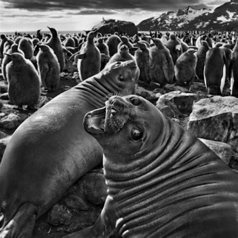 sebastio salgado genesis poster how to understand sebasti 227 o salgado s exquisite and harrowing photographs of nature s splendor
