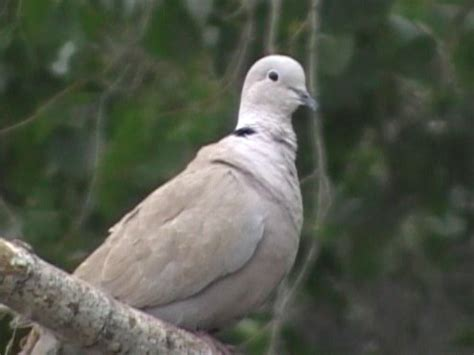 birderfrommaricopa com