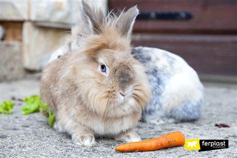coniglio testa di testa di il coniglietto con la criniera ferplast