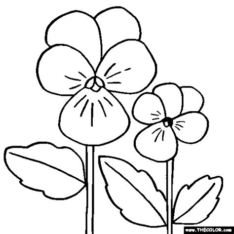 purple violet flower coloring page violet free colouring pages