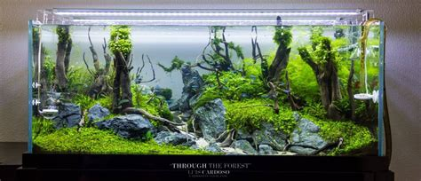 Freshwater Aquascaping Ideas by 100 Aquascape Ideas Meowlogy