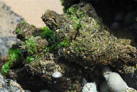 Port Phillip Bay Taxonomy Toolkit Invertebrates Animals Names