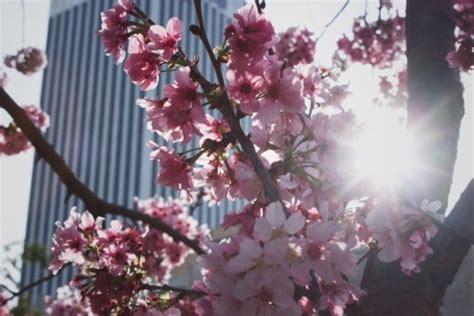 lie  april aesthetic tumblr