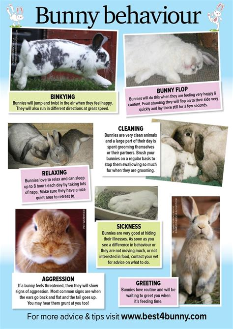 8 Tips On Caring For Pet Rabbits by Best 25 Pet Rabbit Ideas On Rabbits Pet