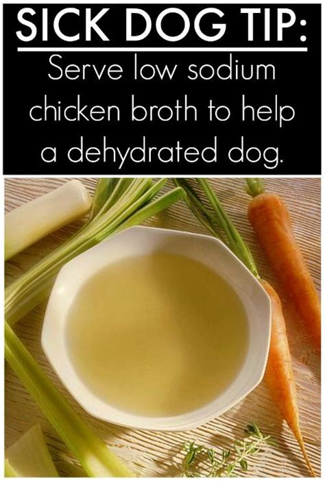 can dogs chicken broth is your sick try this chicken broth for dogs great for a tha