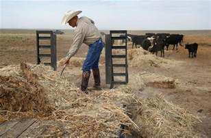 Rancher Logging by Us Ranchers Struggle To Keep Cattle Alive Photos