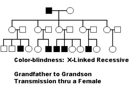 is color blindness recessive x linked disorders
