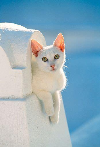 complete cats   sun  hans  silvester