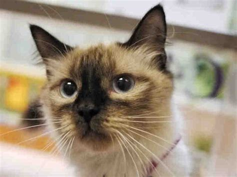 adopt a denver adopt a kitten from the denver dumb friends league with a free cat huffpost