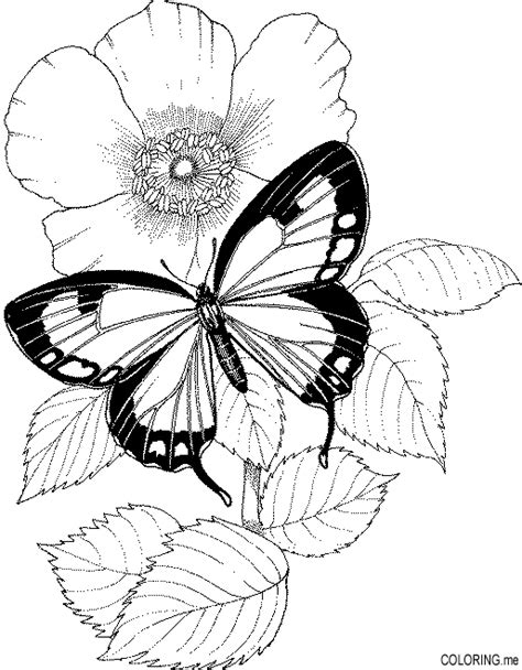 Coloring Pages Of Butterflies And Flowers butterfly and flower coloring pages flower coloring page