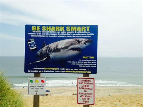 l cape cod alerte 224 cape cod les grands requins blancs sont de plus