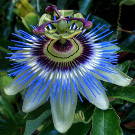 buy tropical plants popular flowers buy cheap flowers lots from