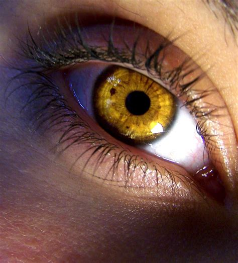 yellow eye color 404 page not found error feel like you re in the