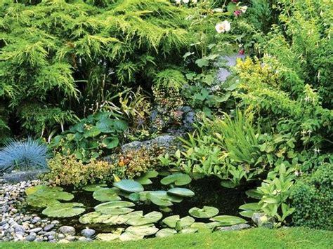 plante pour etang jardin plante de bassin 19 id 233 es pour d 233 corer votre oasis