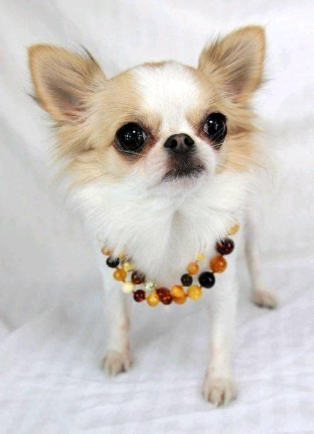 necklace for dogs 1000 images about necklace for dogs on