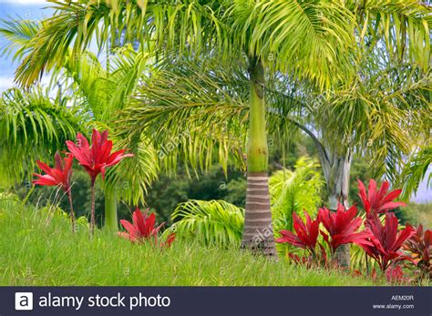 Botanical Garden Plants Palms In Tropical Garden Garden Of Hawaii Stock Photo Ideas 7 Chsbahrain