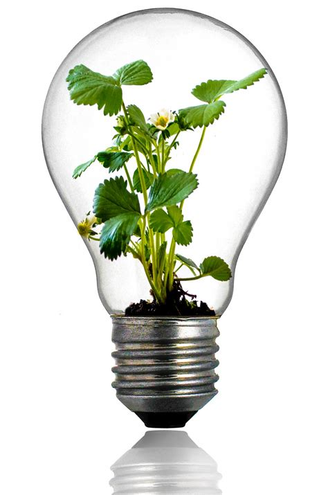 light bulbs for plants green plant in the light bulb free stock photo