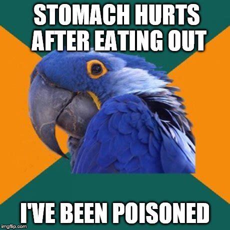 Paranoid Parrot Memes - paranoid parrot meme imgflip