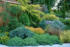 evergreen shrub garden on hill slope with conifers
