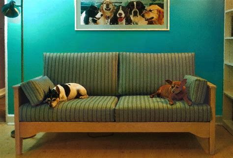 properties and such 5 best pet friendly ways to decorate