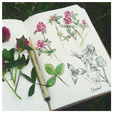 sketchbook clover clover field farm clover field farm