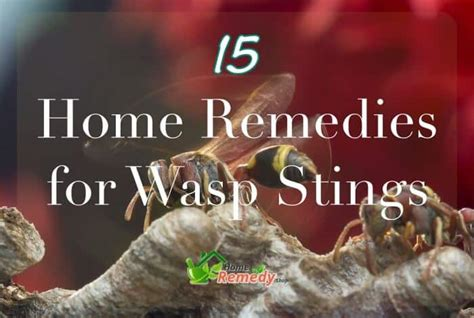 15 wasp sting home remedies to try home remedies