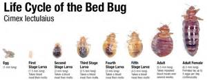Find That Look Like You I M Afraid Of Bed Bugs And Infestation Help Ask An Entomologist