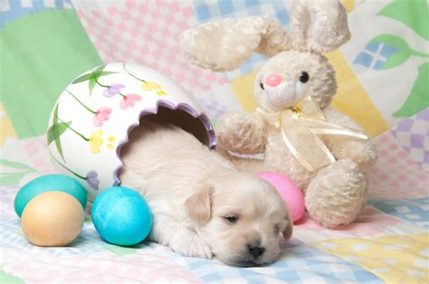 easter puppy these puppies are giving easter bunnies a run for their money it s priceless