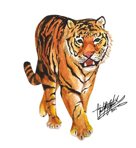 tiger walk by coolbluesonic on deviantart